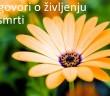 flower-desktop-background