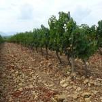 Iz dobrega grozdja znajo Španci narediti dobro vino.