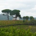 Oko se umiri ob pogledu na vinsko pokrajino
