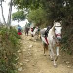 in konji, glavnimi prebivalci Galicije.