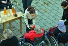 varstvo-starejsih-kostanjev-piknik-13-05